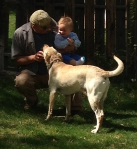 Our Labrador retrievers are great with kids
